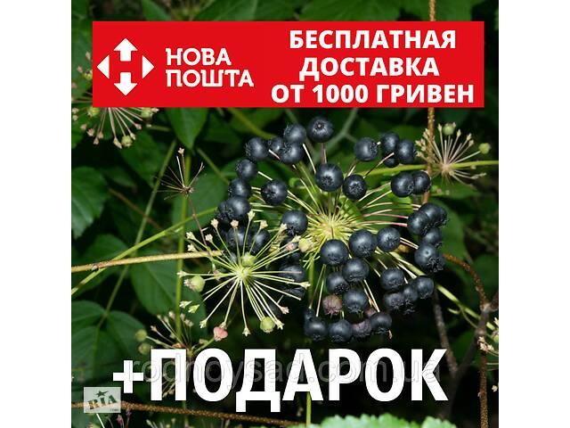 бу Аралия маньчжурская семена (20 шт) в Андреевке