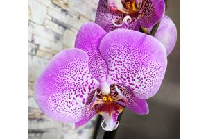 Орхидеи доступные цены