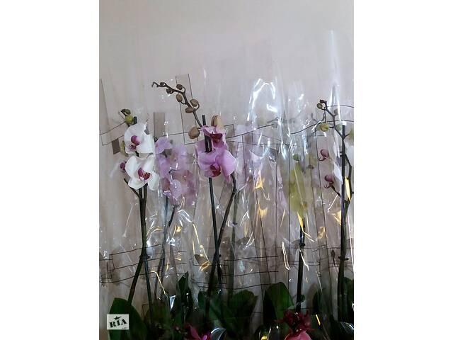 купить бу Орхідеї,опт та роздріб в Благовіщенську (Ульяновка)