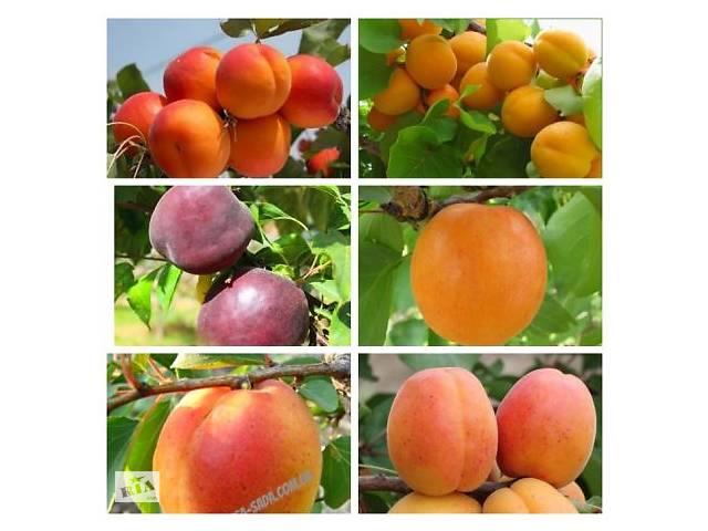 купить бу Саджанці нових сортів яблуні,персика,нектарина і багато іншого на сайті Агродиво в Сумах