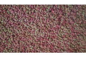 Семена пшеници ОВІДІЙ Еліт пшениця озима, пшениця м'яка
