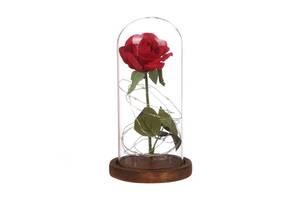 Вечная роза в колбе светящаяся Hapeisy (100325)