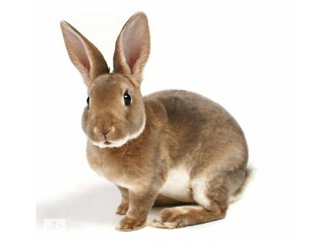 Комбикорм для кролей К 91-1 (от 30 до 60 дней)