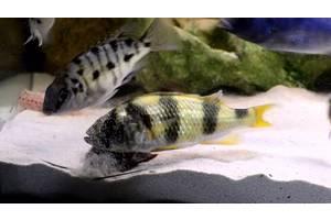 Средства для ухода за аквариумами