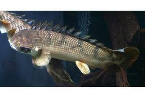 Акваріумні риби