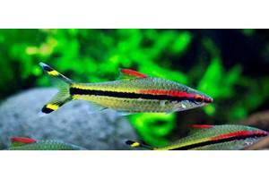 RIA.com – Купити рибку з фото і цінами в Україні 2ac6a7d2863cb