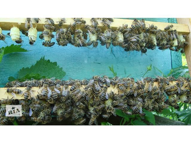 продам Бджолине маточне молочко, квітковий пилок, мед бу в Киеве