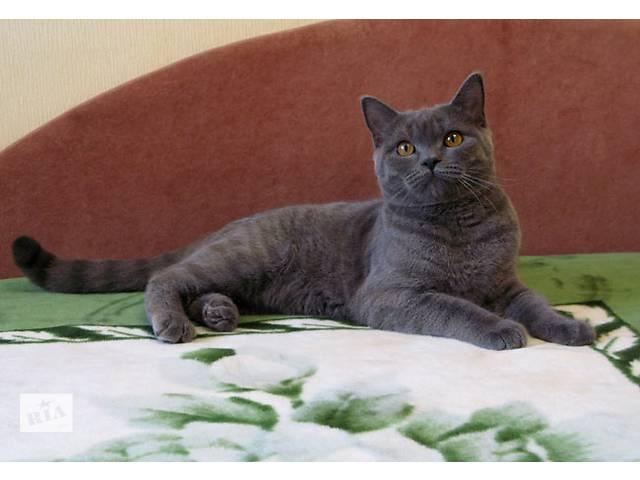 продам Бесподобный плюшевый котик. Голубой британчик. бу в Харькове