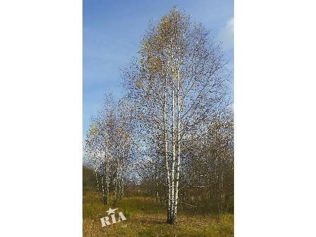 продам саженцы деревьев: берёза, дуб красный, клены, липы, рябина, черемуха, граб, ясень, каштан, акация бу в Киеве