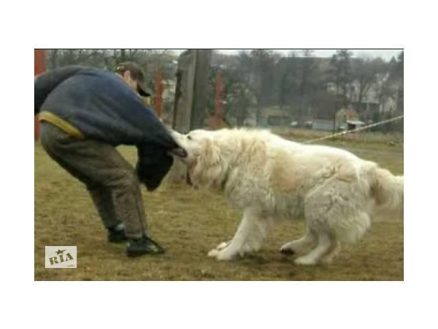 купить бу Дресировка собак в Ивано-Франковске