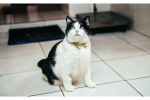Вызов ветеринара на дом Харьков,область