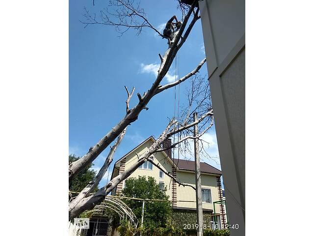 продам Обрезка и спил аварийных деревьев в Одессе,гарантия аккуратности. бу в Одесской области