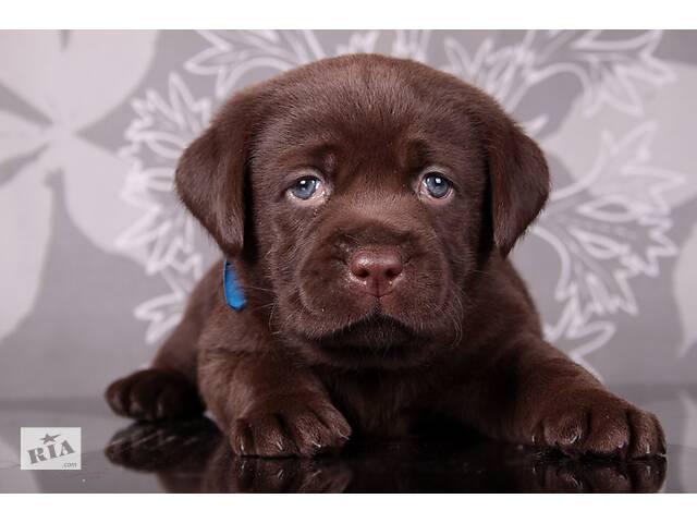 купить бу Породные щенки с интересной родословной.  Питомник в Киеве