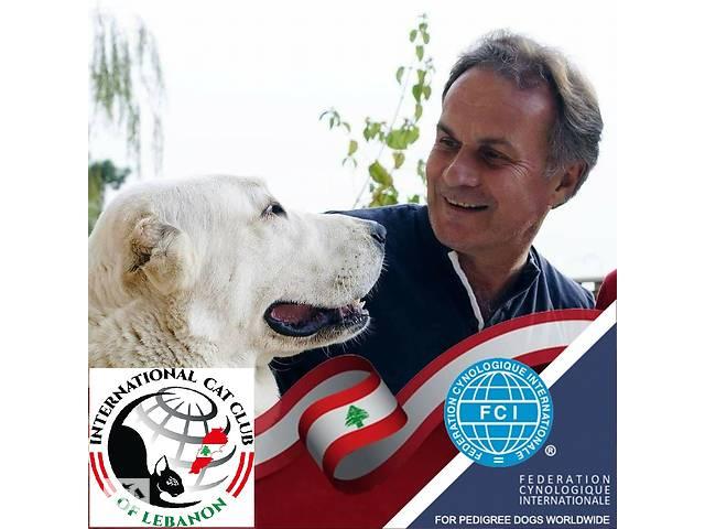 Курс зоопсихології та корекції поведінки для власників собак, кінологів і дресирувальників Онлайн- объявление о продаже   в Україні
