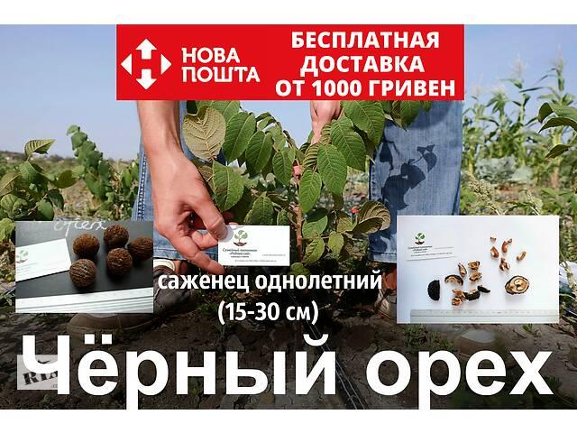 купить бу Черный орех саженцы, (родственник грецкого), саджанці чорного горіха в Андреевке