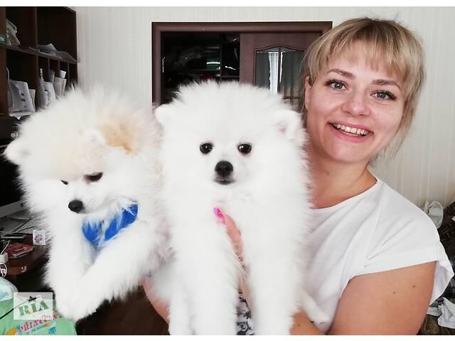 купить бу Щенок шпиц, начните учебный год с долгожданного Подарка! в Києві