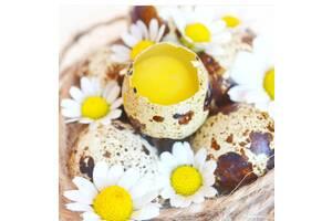 Перепелиные яйца и мясо (розница и ОПТ)