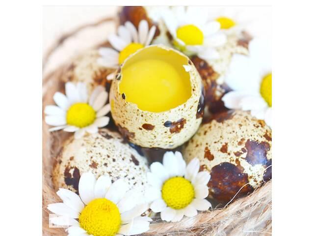 купить бу Перепелиные яйца и мясо (розница и ОПТ) в Одессе