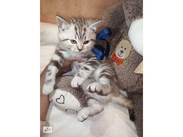 продам Шотландские ВИСЛОУХИЕ и ПРЯМОУХИЕ котята  бу в Киеве