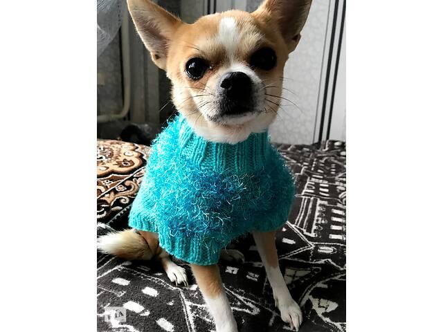 купить бу одежда/свитер для маленьких пород собак /чихуахуа в Кривому Розі