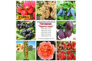 Нужны саженцы? Артемовский питомник. Яблони,груши сливы,вишни,розы, фундук, ИТД