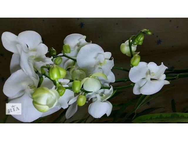 продам Комнатные растения, рассада и цветы бу в Харькове