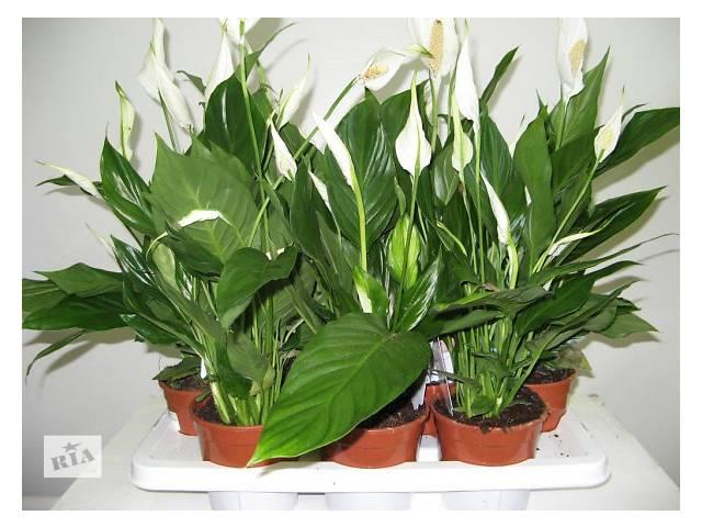 купить бу комнатные растения в Киеве