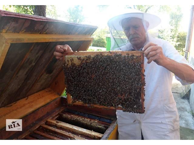 бу Сон на пчелах - отдых и лечение в Стрые