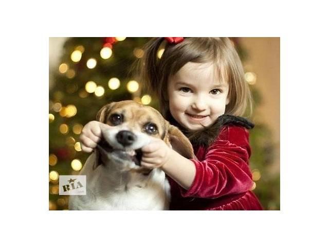 бу Начальный курс воспитания для щенков - профессиональный зоопсихолог. On-Line консультации.  в Украине