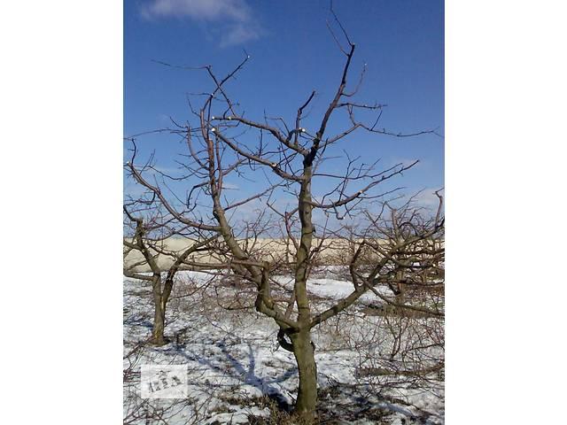 купить бу Обрезка плодовых деревьев,формирование кроны.  в Украине