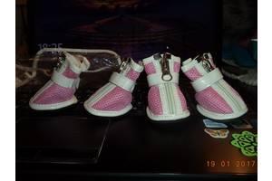 Взуття для собачки, чобітки, черевики, кросівки