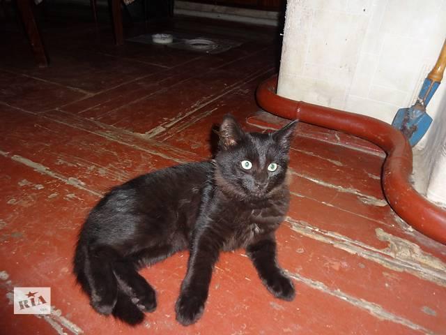 купить бу отдам даром котят домашних в Чернигове
