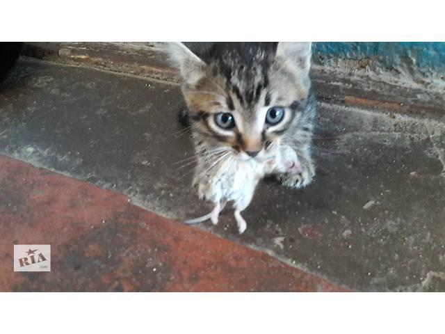 купить бу Отдам котят в хорошие руки. Мышеловы и крыселовы. в Николаеве