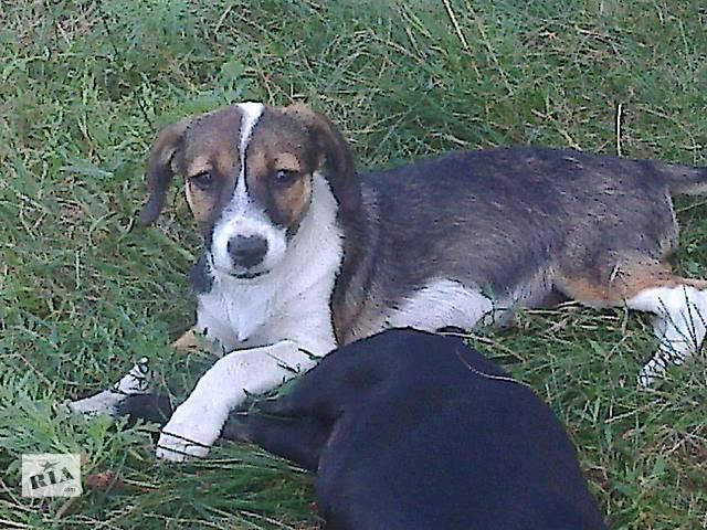 бу Отдам собаку бесплатно пес охранник в Днепре (Днепропетровск)
