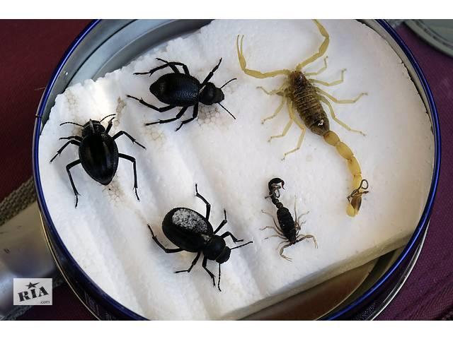 продам Замороженные скорпионы (Leiurus quinquestriatus) бу в Виннице