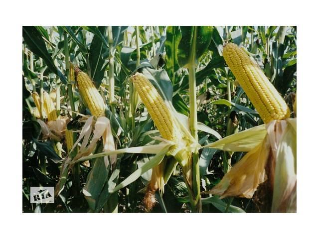 "бу семена кукурузы ""Моника 350 МВ"" в Виннице"