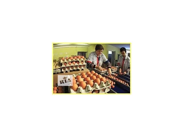 продам Польша. Упаковка сортировка куриных яиц. бу  в Украине