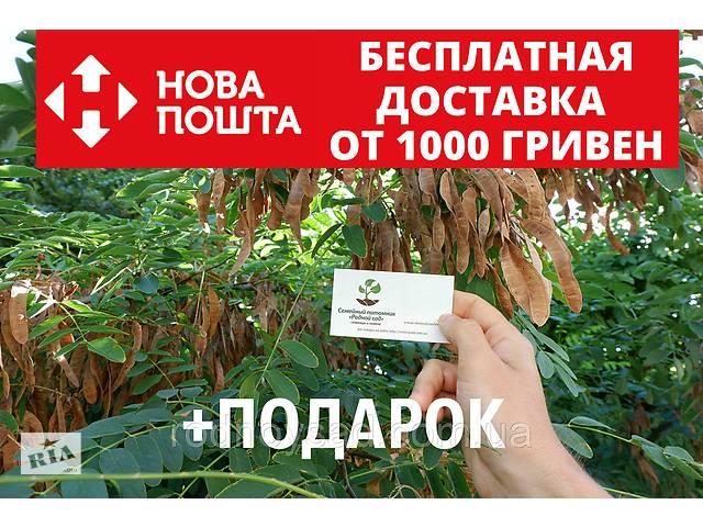 бу Акация белая семена(20шт) в Андреевке