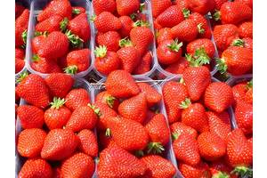 Саджанці полуниці