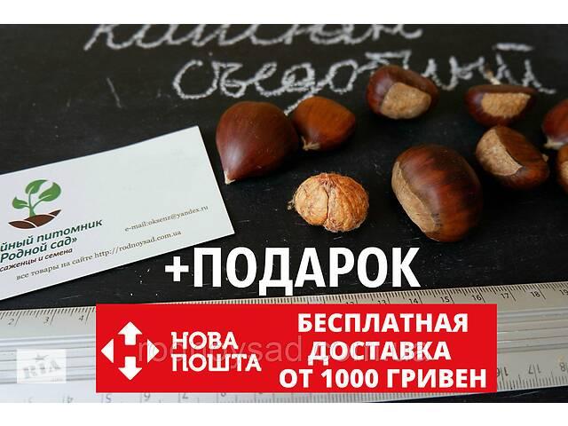 продам Каштан съедобный семена (8-10 грамм) 10 шт (Castánea satíva, посевной) для саженцев насіння на саджанці бу в Андреевке