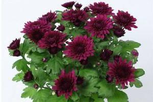 Гарноквітучі рослини