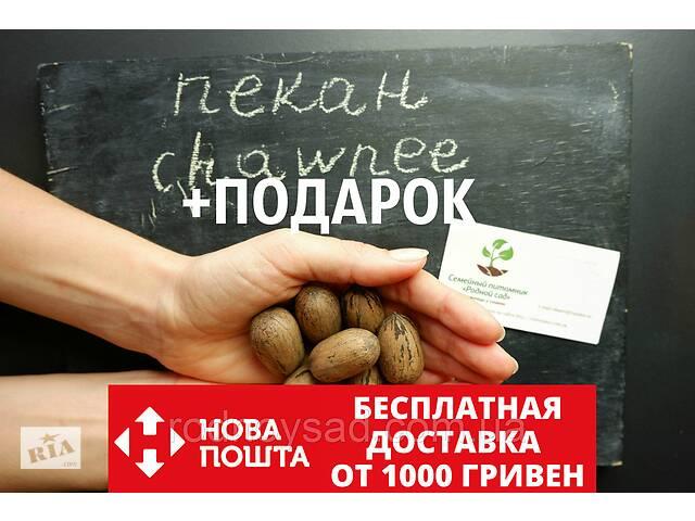 """Пекан (10 штук) сорт """"Chawnee"""" (средне-ранний) семена орех кария для саженцев(насіння)Carya illinoinensis- объявление о продаже  в Андреевке"""