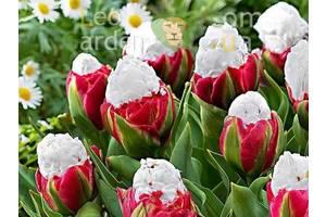 Садові цибулинні рослини