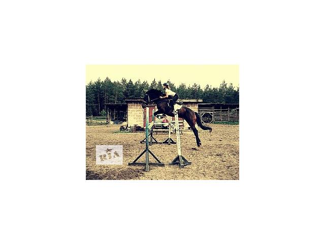 Продам коня для занятия спортом- объявление о продаже  в Киеве