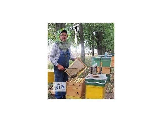 бу Продам пчелосемьи, пчелопакеты. в Гайсине