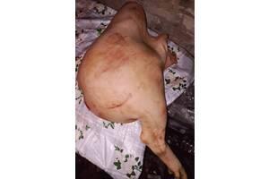 М'ясо свинини домашнє четвертинками