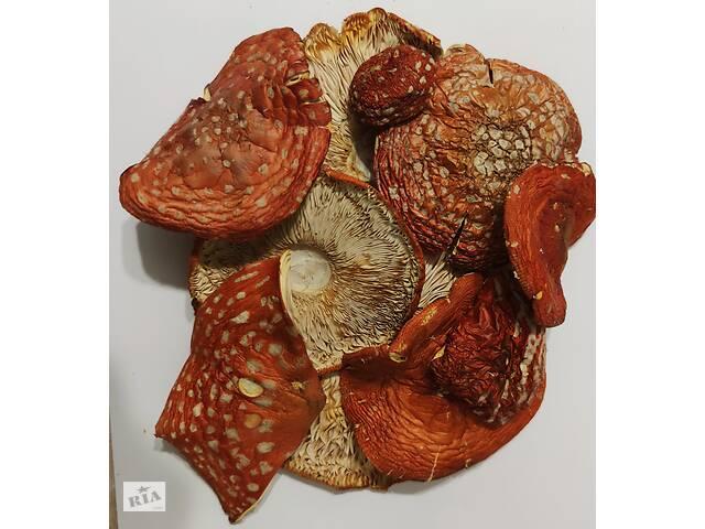 Мухомор красный сушеный  (Amanita muskcaria)- объявление о продаже  в Чернигове