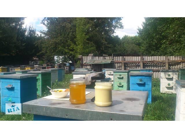 бу Натуральный мёд (крем мёд) от пчеловода в Черниговке