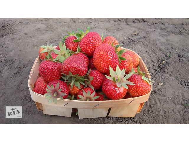 продам Продам ягоды клубники урожай 2020 бу в Конотопе