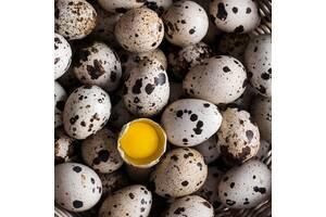 Продаю перепелиные яйца,мясо перепелов